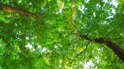 Trees (2.7K)