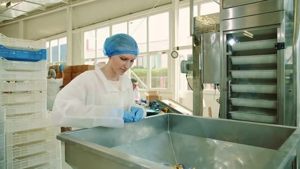 Thumbnail for Candy Factory. Factory Worker Checking Packing Machine.