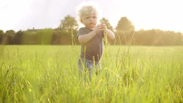 Thumbnail for Baby Boy with Curly Blonde Hair Playing with the Grass