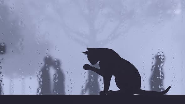 Thumbnail for Stray Cat Waiting on Windowsill in Rainy Weather