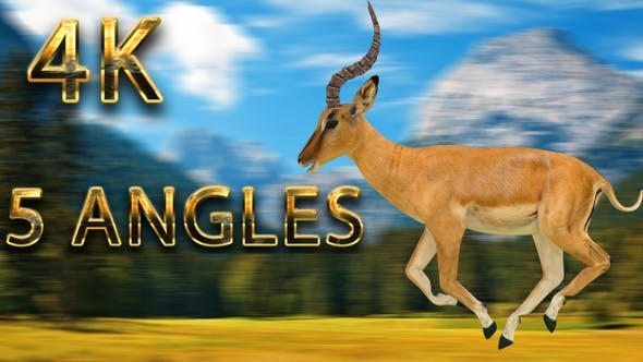 Thumbnail for Impala running from 5 different angles