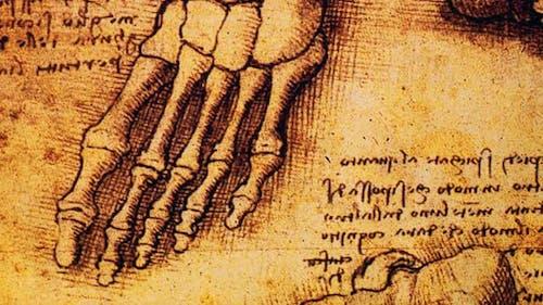 Anatomy Art Drawing