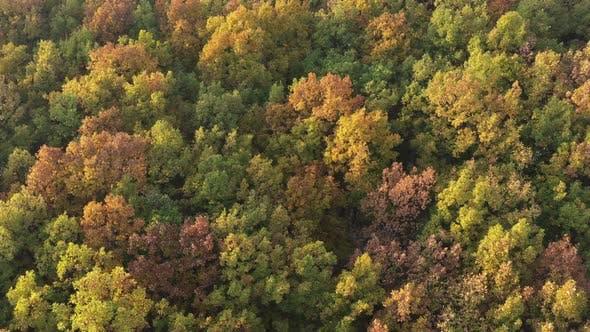 Schöne orange und gelbe Farben des Waldes bis zum Herbst 4K Luftbild Video