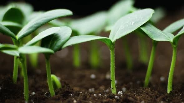 Thumbnail for Plant