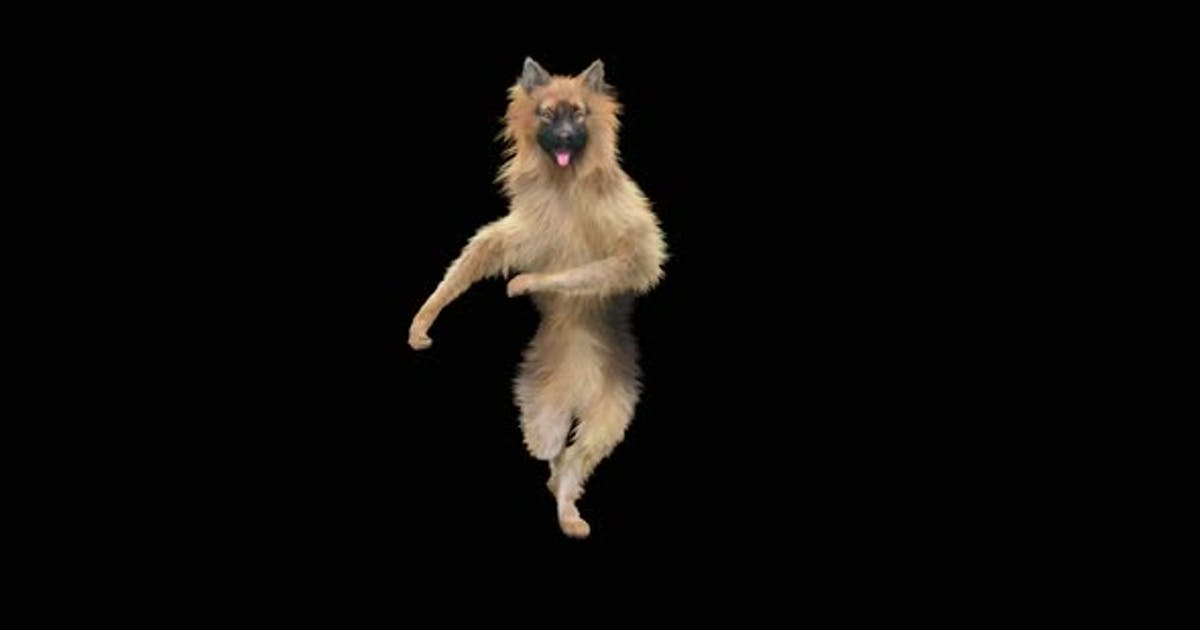 Dog Dance HD