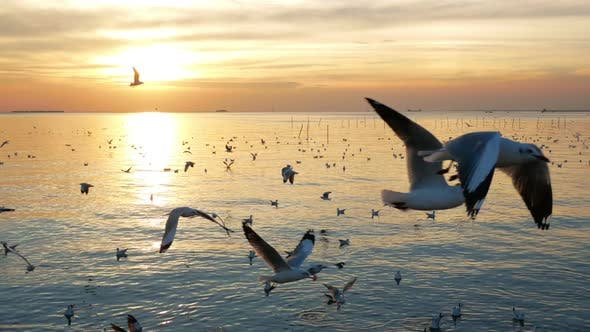 Thumbnail for Birds Flying Over Sea