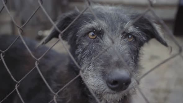 Thumbnail for Homeless Dogs in a Dog Shelter