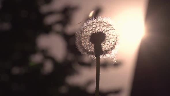 Thumbnail for Flying Dandelion Umbrellas