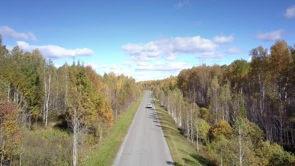 Thumbnail for Aerial Car Drives on Road in Birch Forest Disappearing Away