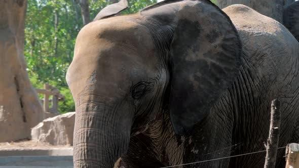 Portrait d'éléphant dans Safari Park