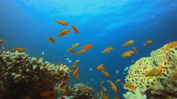 Thumbnail for Underwater Tropical Sea Seascape