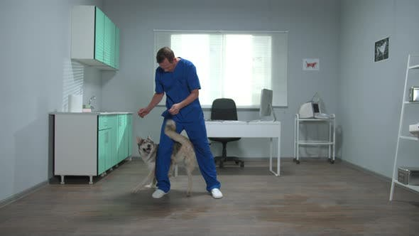 SLow Motion, Veterinary Doctor Trains a Husky with Snacks in Cabinet