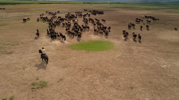 Thumbnail for A Herd Of Running Horses