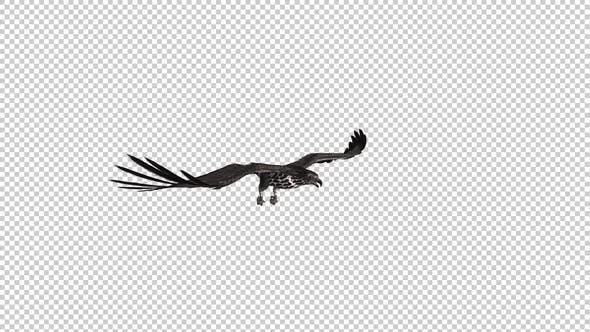 Habicht - Gleit- und Fliegenschleife - Side Angle