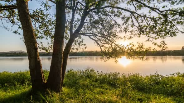 Thumbnail for Peaceful Evening Sunset over Green Tree on Grassy River Bank in Sunny Summer Nature