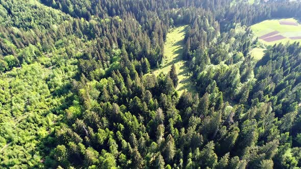 Thumbnail for Aerial Shot of Green Forest
