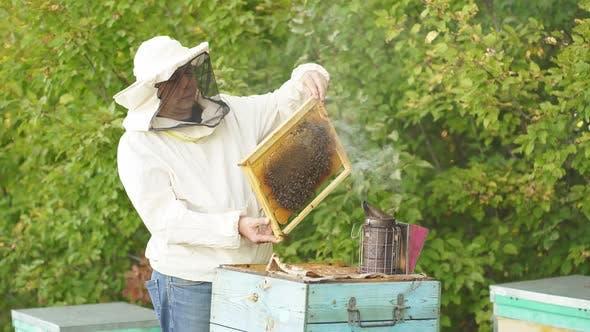 Beekeeper Fumbles Bee Hive with White Smoke.