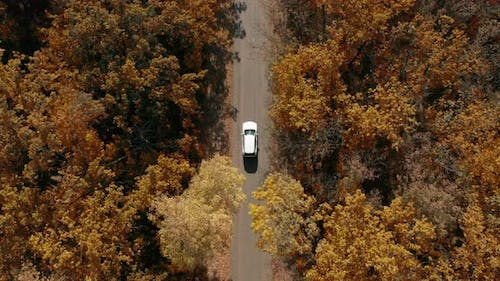 Aerial Top Down View of White Car Driving on Country Road in Forest in At.