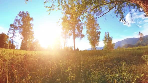 Cover Image for Sunny Rural Meadow at Mountain Landscape with Green Grass, Trees and Sun Rays