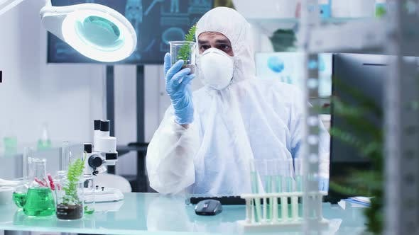 Cover Image for Biologist Analyzing Sample Test Plants in Modern Laboratory