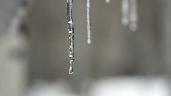 Droplets of water falling from melting icicles.