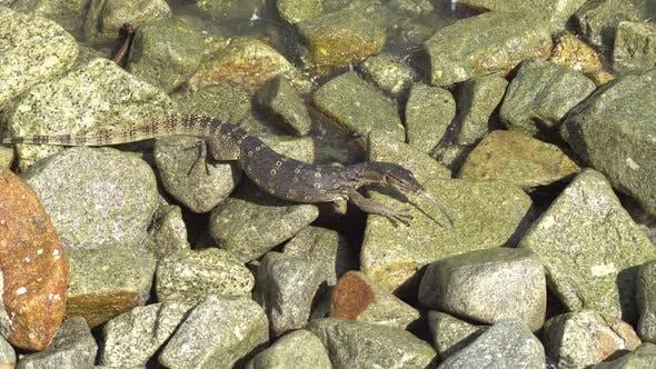 Monitor crawl at the rock