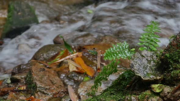 Thumbnail for Plant On Waterfall