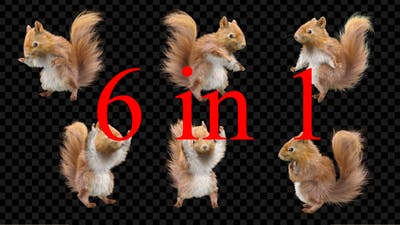 Squirrel Dancing 6 Pack