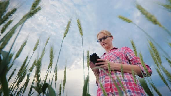 Thumbnail for Woman Farmer Working in a Wheat Field, Using a Smartphone. Low Angle Shooting