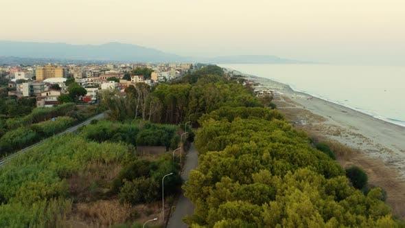 Mediterranean bush