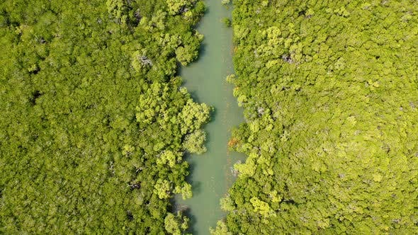 Aerial view of transparent river crossing dense forest, Australia.
