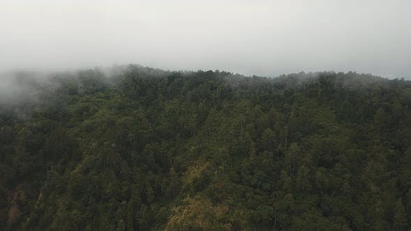 Rainforest in the Fog and Clouds