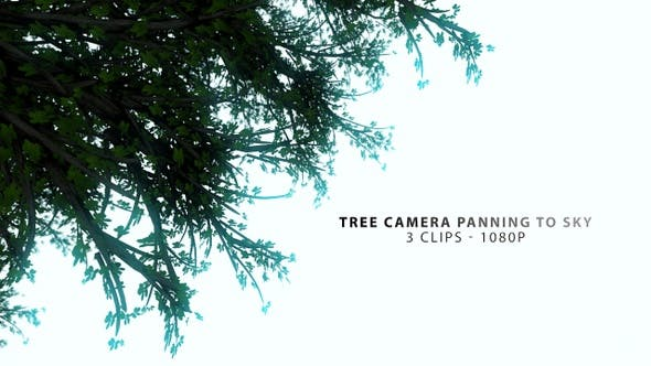 Thumbnail for Tree Peaceful Camera Panning To Sky