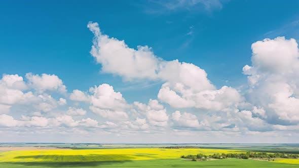 Luftaufnahme der Agrarlandschaft mit blühenden blühenden Rapsölsaaten auf der Feldwiese