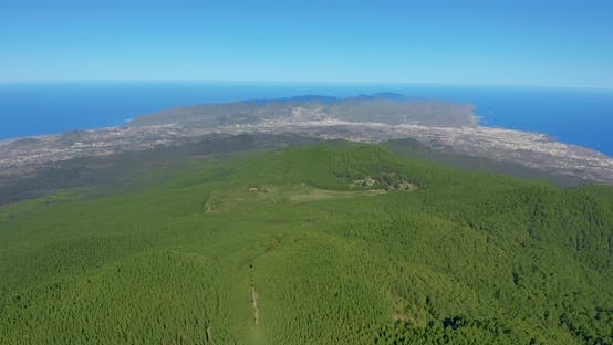 Thumbnail for Aerial View Dense Pine Tree Forest on Tenerife with a Glimpse of Distant Coastal City.