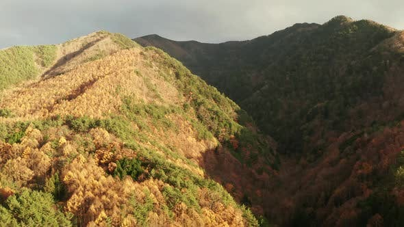 Thumbnail for Aerial View of the Autumn Forest in the Mountains at Sunset. Nagano, Japan