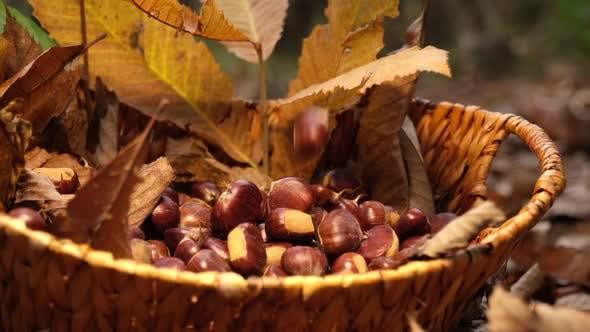 Thumbnail for Kastanien Herbst Food