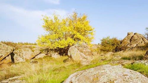 L' arbre est habillé d'une tenue d'automne
