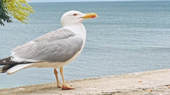 Thumbnail for Seagulls Walking By the Beach Against Natural Blue Water Background.