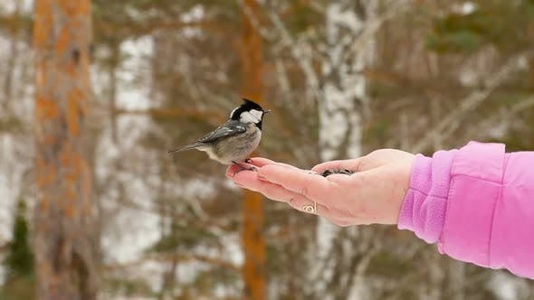 Thumbnail for Bird in Women's Hand Eat Seeds