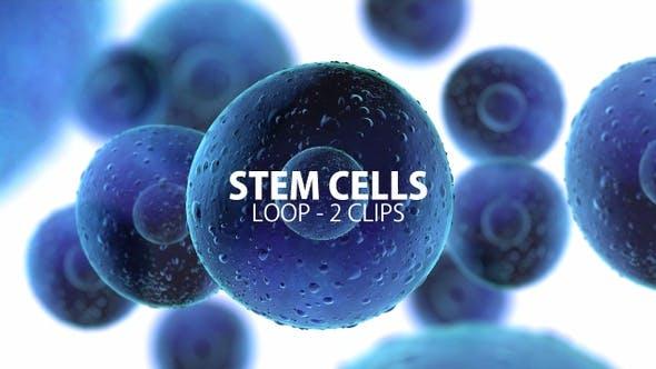 Thumbnail for Stem Cells