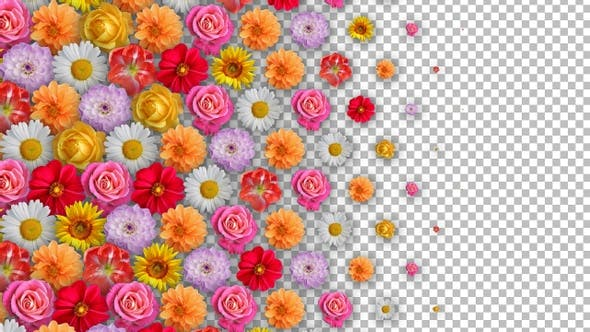 Flower Transitions Pack 5 Clips - Linear Transition