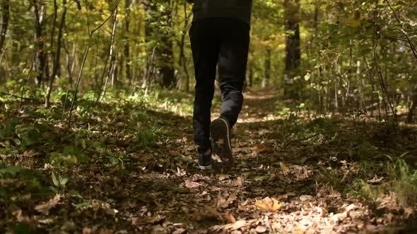 Thumbnail for Sportler laufen in einem Wald