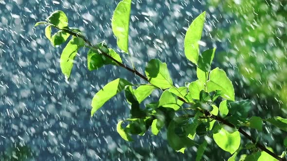 Thumbnail for Rain Water Falling on Green Leaves
