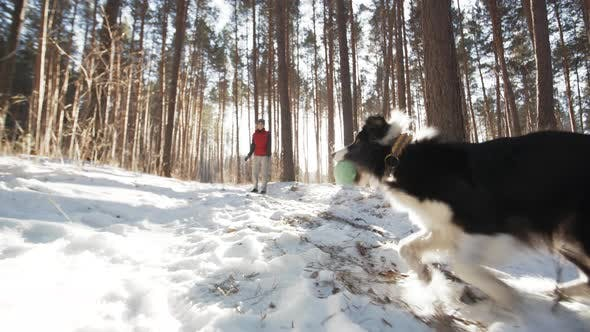 Thumbnail for Adorable Dog Playing with Ball in Forest