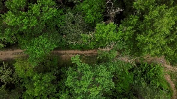 Thumbnail for Drone's Eye View -  Aerial Top Down View of Woodland Mysterious Trail