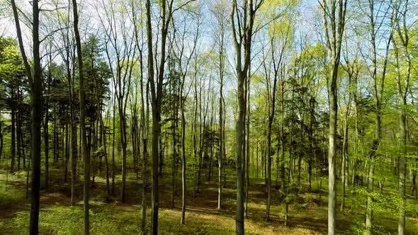 Thumbnail for Bunte Natur Umwelt Ökologie im Freien Herbst Saison Hintergrund