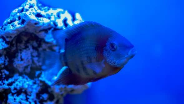 Thumbnail for Big Fish Swims in Aquarium