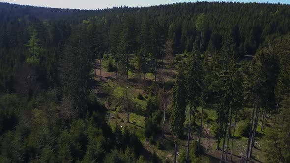 Thumbnail for AREAL: Close Flight Over Forest in Summertime, Germany, Sunshine