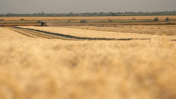 Thumbnail for Classy Combine Harvester Threshing Plump Wheat Spikes on a Sunny Day in Slo-mo